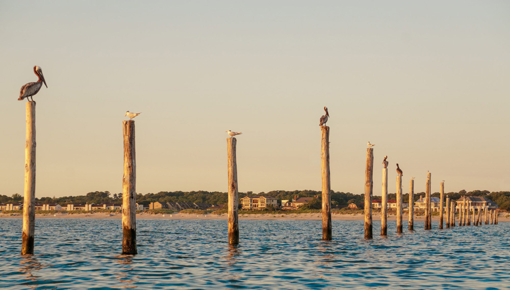 water birds rest on poles
